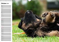 Deutscher Schäferhund - Welpen (Wandkalender 2019 DIN A3 quer) - Produktdetailbild 10