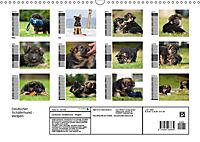Deutscher Schäferhund - Welpen (Wandkalender 2019 DIN A3 quer) - Produktdetailbild 13
