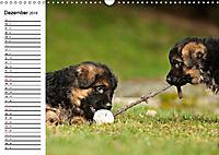 Deutscher Schäferhund - Welpen (Wandkalender 2019 DIN A3 quer) - Produktdetailbild 12