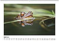 Deutschlands bezaubernde Tierwelt (Wandkalender 2019 DIN A2 quer) - Produktdetailbild 2