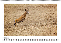 Deutschlands bezaubernde Tierwelt (Wandkalender 2019 DIN A2 quer) - Produktdetailbild 4