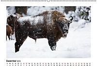Deutschlands bezaubernde Tierwelt (Wandkalender 2019 DIN A2 quer) - Produktdetailbild 6