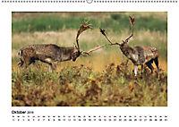 Deutschlands bezaubernde Tierwelt (Wandkalender 2019 DIN A2 quer) - Produktdetailbild 8