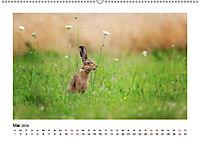 Deutschlands bezaubernde Tierwelt (Wandkalender 2019 DIN A2 quer) - Produktdetailbild 7