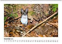 Deutschlands bezaubernde Tierwelt (Wandkalender 2019 DIN A2 quer) - Produktdetailbild 11