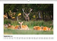 Deutschlands bezaubernde Tierwelt (Wandkalender 2019 DIN A3 quer) - Produktdetailbild 2