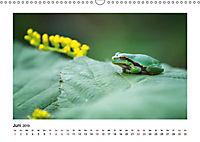 Deutschlands bezaubernde Tierwelt (Wandkalender 2019 DIN A3 quer) - Produktdetailbild 4
