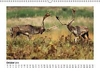 Deutschlands bezaubernde Tierwelt (Wandkalender 2019 DIN A3 quer) - Produktdetailbild 6