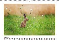 Deutschlands bezaubernde Tierwelt (Wandkalender 2019 DIN A3 quer) - Produktdetailbild 5