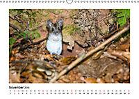 Deutschlands bezaubernde Tierwelt (Wandkalender 2019 DIN A3 quer) - Produktdetailbild 11
