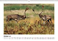Deutschlands bezaubernde Tierwelt (Wandkalender 2019 DIN A3 quer) - Produktdetailbild 10