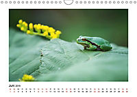 Deutschlands bezaubernde Tierwelt (Wandkalender 2019 DIN A4 quer) - Produktdetailbild 6