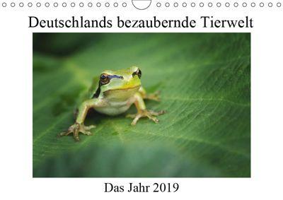 Deutschlands bezaubernde Tierwelt (Wandkalender 2019 DIN A4 quer), Björn Reibert
