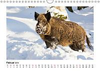 Deutschlands bezaubernde Tierwelt (Wandkalender 2019 DIN A4 quer) - Produktdetailbild 2