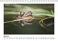 Deutschlands bezaubernde Tierwelt (Wandkalender 2019 DIN A4 quer) - Produktdetailbild 4