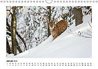 Deutschlands bezaubernde Tierwelt (Wandkalender 2019 DIN A4 quer) - Produktdetailbild 1