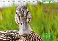 Deutschlands Vogelwelt (Tischkalender 2019 DIN A5 quer) - Produktdetailbild 6