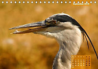 Deutschlands Vogelwelt (Tischkalender 2019 DIN A5 quer) - Produktdetailbild 10