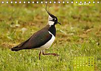 Deutschlands Vogelwelt (Tischkalender 2019 DIN A5 quer) - Produktdetailbild 12