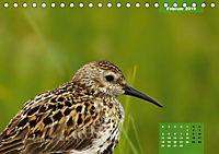 Deutschlands Vogelwelt (Tischkalender 2019 DIN A5 quer) - Produktdetailbild 2
