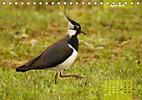 Deutschlands Vogelwelt (Tischkalender 2019 DIN A5 quer) - Produktdetailbild 4