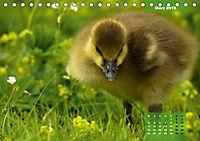 Deutschlands Vogelwelt (Tischkalender 2019 DIN A5 quer) - Produktdetailbild 3