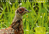 Deutschlands Vogelwelt (Tischkalender 2019 DIN A5 quer) - Produktdetailbild 8
