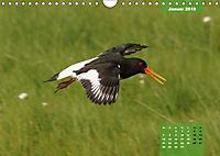 Deutschlands Vogelwelt (Wandkalender 2019 DIN A4 quer) - Produktdetailbild 1