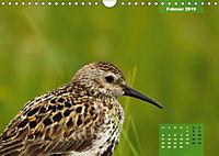 Deutschlands Vogelwelt (Wandkalender 2019 DIN A4 quer) - Produktdetailbild 2