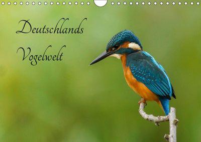 Deutschlands Vogelwelt (Wandkalender 2019 DIN A4 quer), Alexander Honold