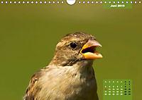 Deutschlands Vogelwelt (Wandkalender 2019 DIN A4 quer) - Produktdetailbild 6