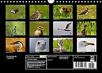 Deutschlands Vogelwelt (Wandkalender 2019 DIN A4 quer) - Produktdetailbild 13