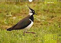 Deutschlands Vogelwelt (Wandkalender 2019 DIN A4 quer) - Produktdetailbild 4