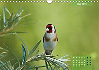 Deutschlands Vogelwelt (Wandkalender 2019 DIN A4 quer) - Produktdetailbild 5