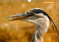 Deutschlands Vogelwelt (Wandkalender 2019 DIN A4 quer) - Produktdetailbild 9