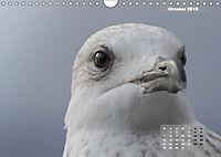 Deutschlands Vogelwelt (Wandkalender 2019 DIN A4 quer) - Produktdetailbild 10