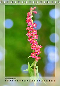 Deutschlands wilde Orchideen (Tischkalender 2019 DIN A5 hoch) - Produktdetailbild 11