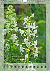 Deutschlands wilde Orchideen (Wandkalender 2019 DIN A4 hoch) - Produktdetailbild 10