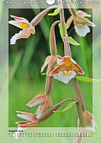 Deutschlands wilde Orchideen (Wandkalender 2019 DIN A4 hoch) - Produktdetailbild 8