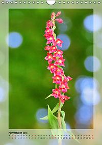 Deutschlands wilde Orchideen (Wandkalender 2019 DIN A4 hoch) - Produktdetailbild 11