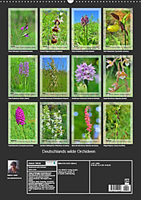 Deutschlands wilde Orchideen (Wandkalender 2019 DIN A2 hoch) - Produktdetailbild 13