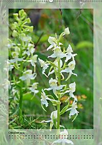 Deutschlands wilde Orchideen (Wandkalender 2019 DIN A2 hoch) - Produktdetailbild 10