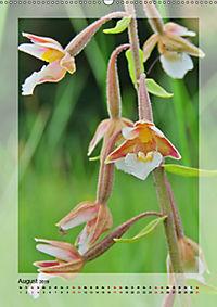 Deutschlands wilde Orchideen (Wandkalender 2019 DIN A2 hoch) - Produktdetailbild 8