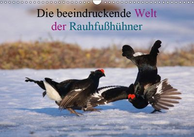 Die beeindruckende Welt der Rauhfusshühner (Wandkalender 2019 DIN A3 quer), Winfried Erlwein