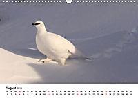 Die beeindruckende Welt der Rauhfusshühner (Wandkalender 2019 DIN A3 quer) - Produktdetailbild 8