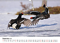 Die beeindruckende Welt der Rauhfusshühner (Wandkalender 2019 DIN A3 quer) - Produktdetailbild 12