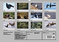Die beeindruckende Welt der Rauhfusshühner (Wandkalender 2019 DIN A3 quer) - Produktdetailbild 13