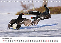Die beeindruckende Welt der Rauhfusshühner (Tischkalender 2019 DIN A5 quer) - Produktdetailbild 12