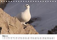 Die beeindruckende Welt der Rauhfusshühner (Tischkalender 2019 DIN A5 quer) - Produktdetailbild 3