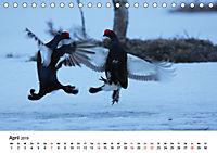 Die beeindruckende Welt der Rauhfusshühner (Tischkalender 2019 DIN A5 quer) - Produktdetailbild 4